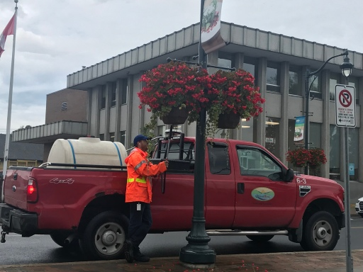 watering the street flowers