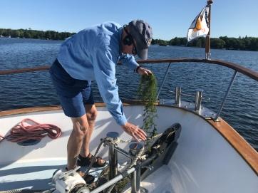deweeding the anchor